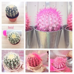 ColorfulCactusEtapes